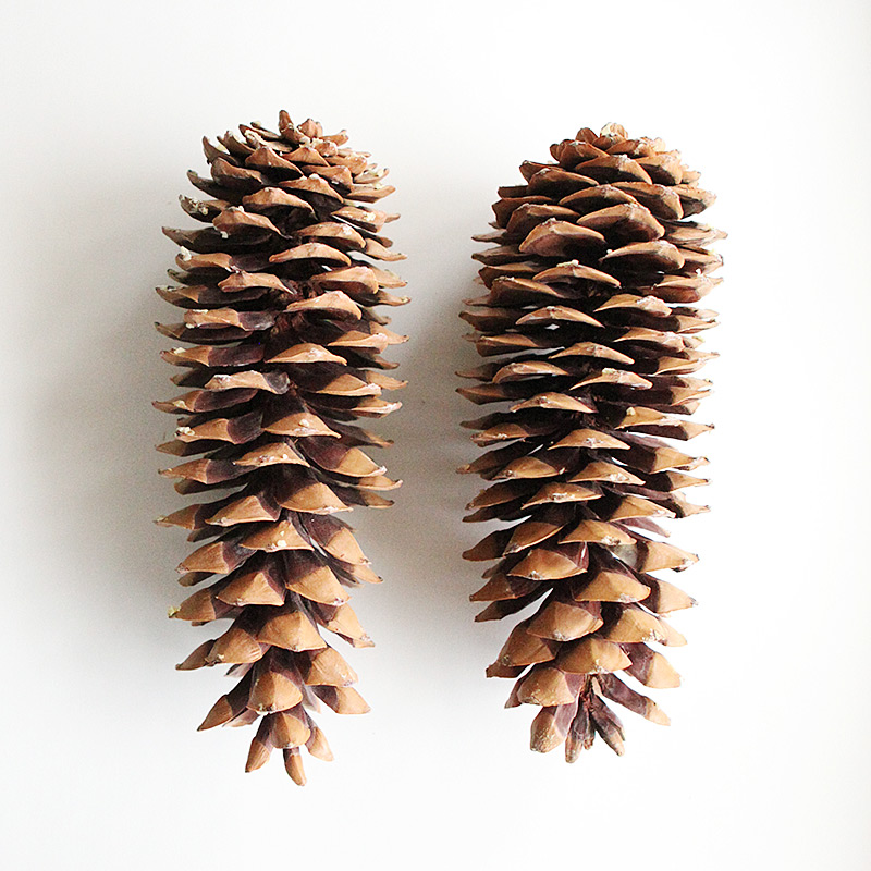 White washed pine cones with tassles